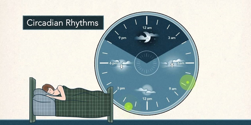 Circadian sleep-wake rhythm