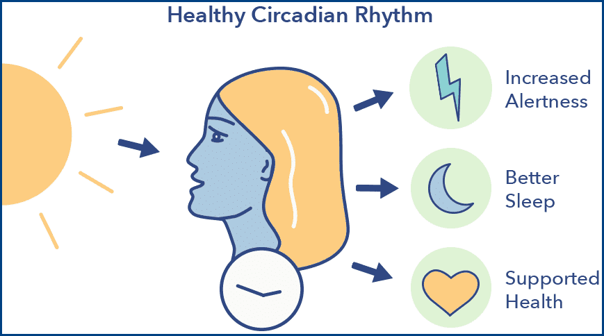 Circadian Rhythm sleep time