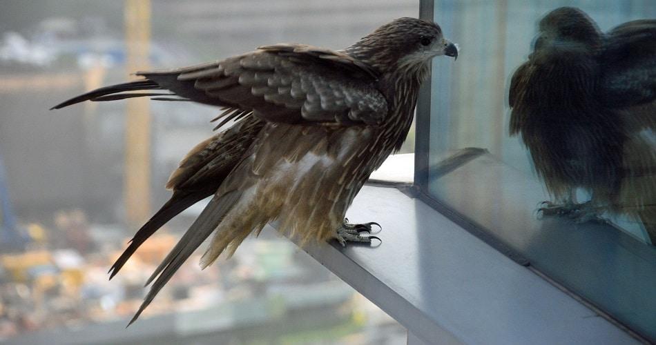 Spiritual Meanings of Bird Knocking on Window