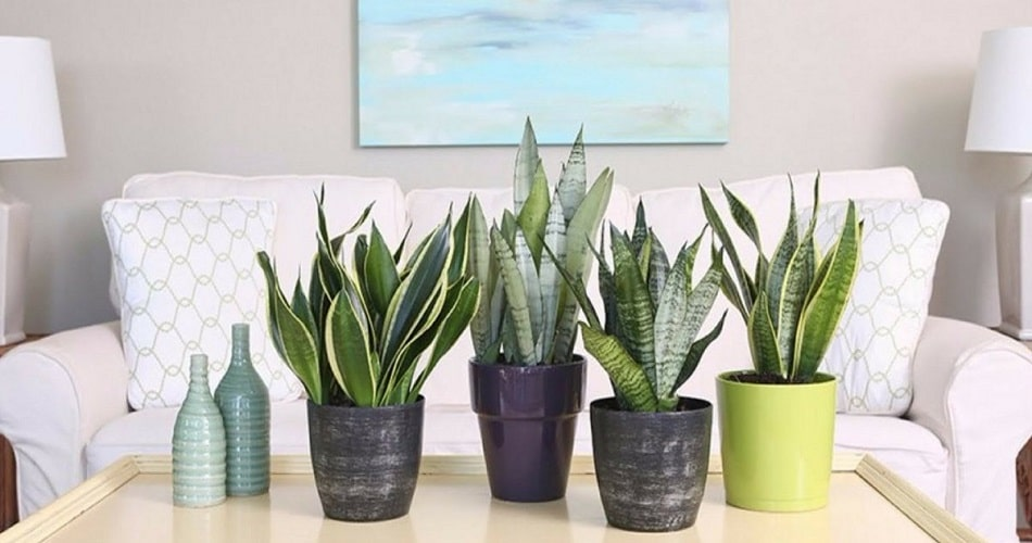 Best Plants for Bedroom Oxygen